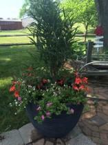 Plant Container JBP Landscape Contractor