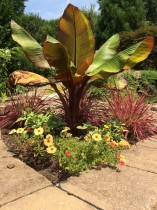 Planting Container Collegeville