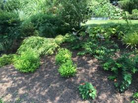 Collegeville Plant Landscape
