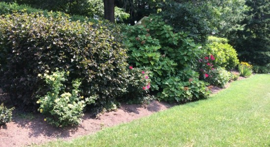 Shrubbery Bed Collegeville