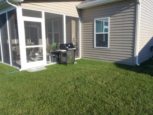 Grassy Backyard